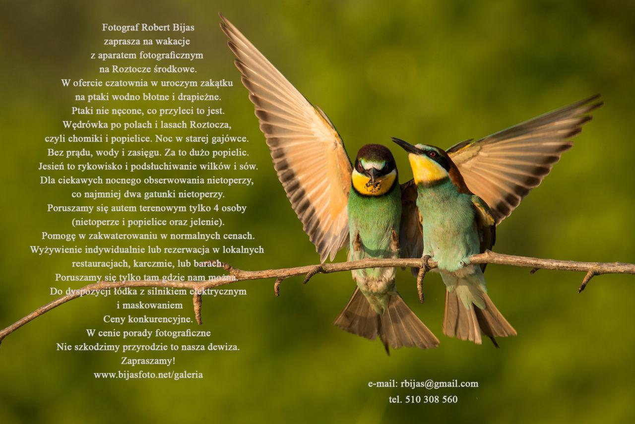 Reklama-Robert-Bijas-Fotograf